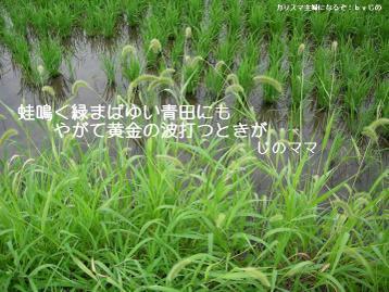 Dscn68970001msumi_2